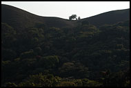 Lonely Tree, Kodagu (Coorg) Hills, India