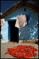 Drying Chilli, Hampi - Nature, India