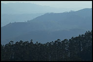 Ooty Landscape, Ooty, India