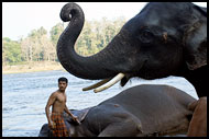 Elephant And Man, Elephant Training Center, India