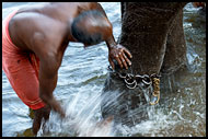 Washing An Elephant, Elephant Training Center, India