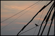 Chinese Net (Cheena Vala), Cochin - Chinese Nets (Cheena vala), India