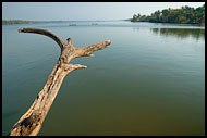 Tree And Sea, Cochin (Kochi), India