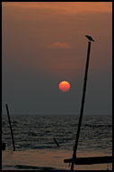 Sunset In Cochin, Cochin (Kochi), India