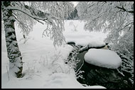 New Snow In Nordmarka, Best of 2007, Norway