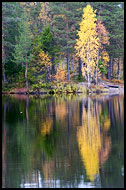 Fall By Kopperhaugtjernet, Autumn in Nordmarka, Norway
