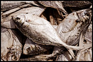 Dry Fish, Casamance, Senegal