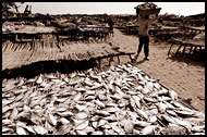 Drying Fish, Casamance, Senegal