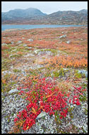 Autumn Colors By Vavatn, Autumn In Hemsedal, Norway