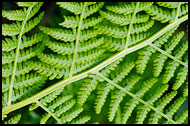 Fern Abstraction, Best Of 2009, Norway
