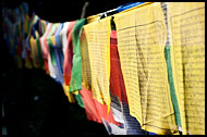 Prayer Flags, Enchey Monastery, Buddhist Sikkim, India