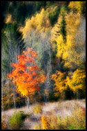 Golden Trees, Best Of 2010, Norway