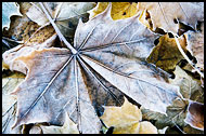 Leaves And Frost, Best Of 2010, Norway