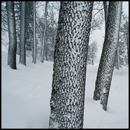 Trees In Winter, Best Of 2010, Norway