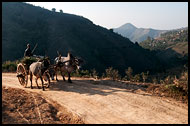 Ox Cart, Best Of, Myanmar (Burma)