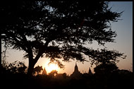 Tree And Temples, Bagan, Myanmar (Burma)