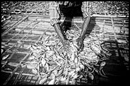 Drying Fish, Black And White, Myanmar (Burma)
