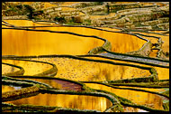 Yuanyang Rice Fields, Yuanyang, China
