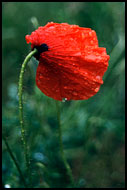 Sad Poppy, Best of 2001, Norway